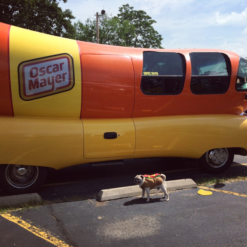Pug visits the Wiener Mobile