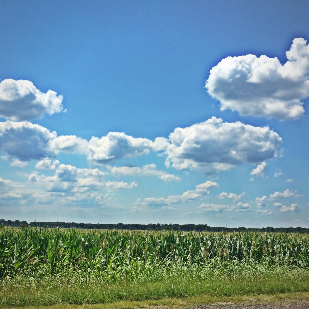 Cornfield and Clouds