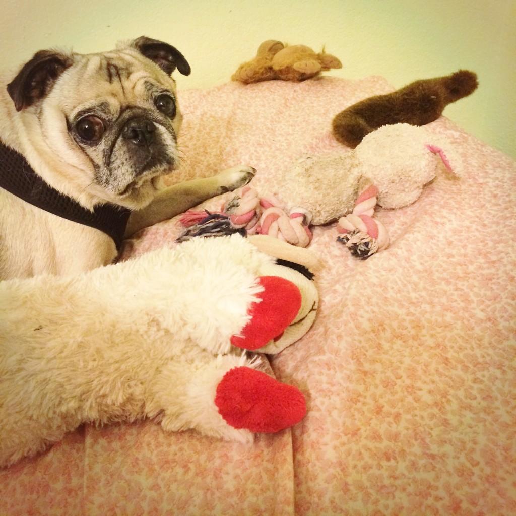 Pug Toy Horde