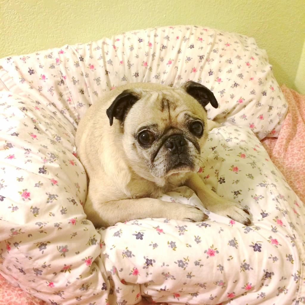 Pug Pillows