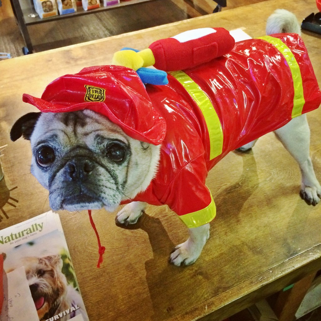 Pug Fireman