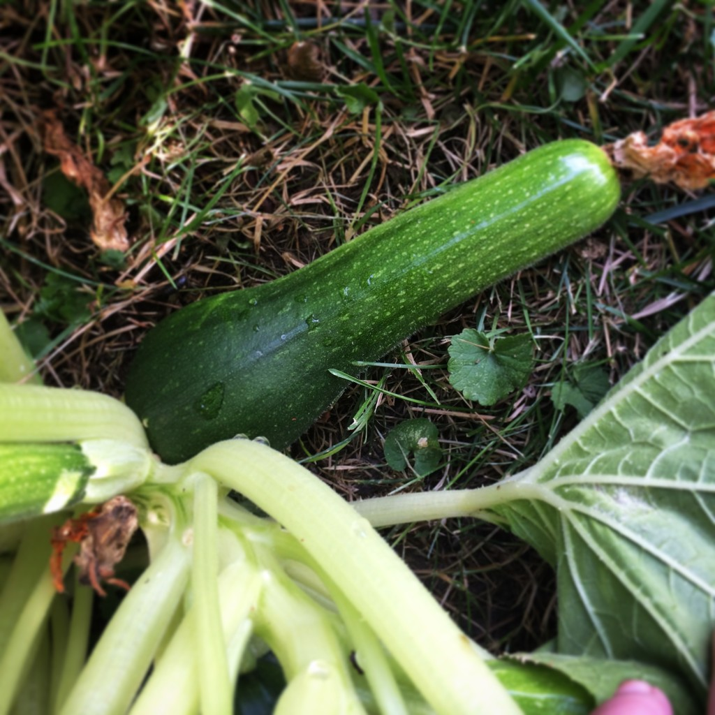 Dirty Zucchini