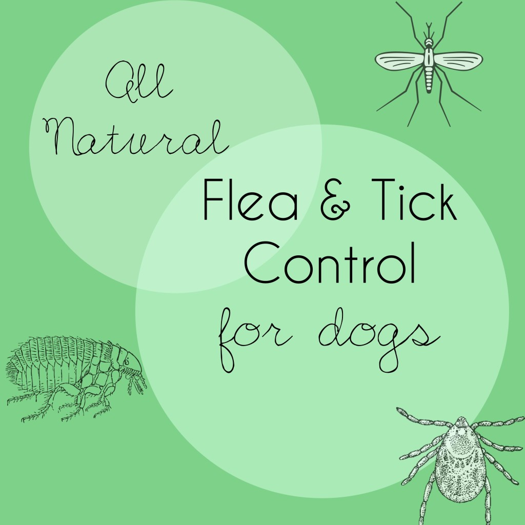 All Natural Flea and Tick Control for Dogs