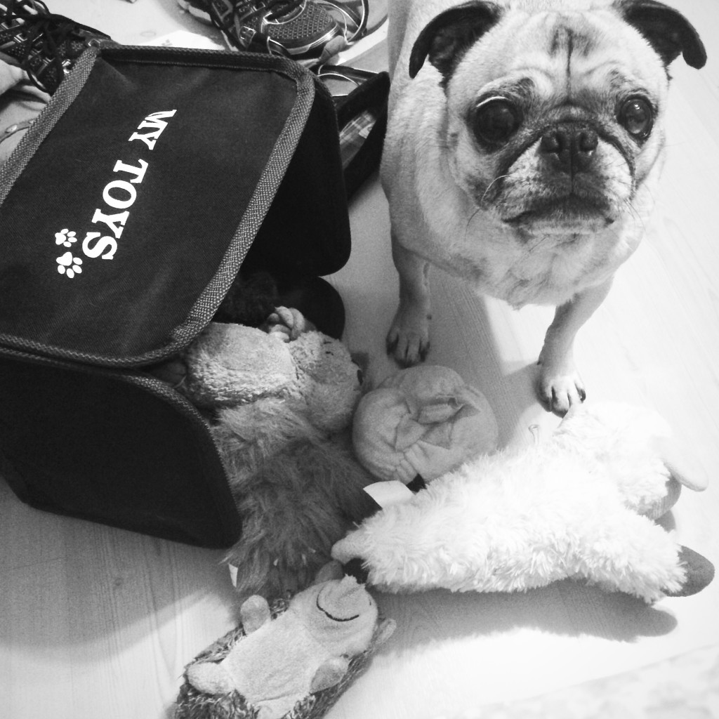 Pug Knocks Over Toybox