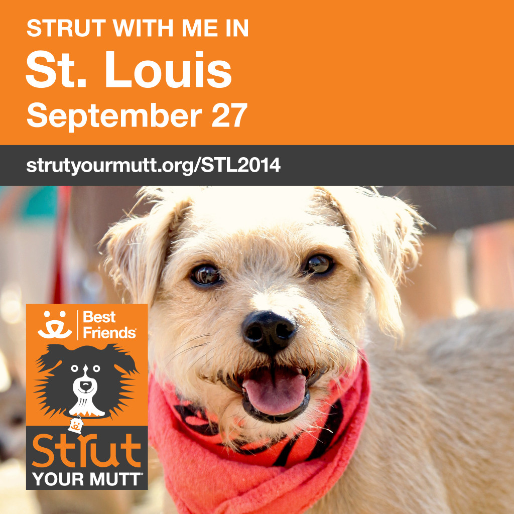 Strut Your Mutt