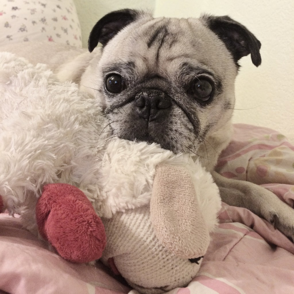 Pug and Lamb Chop