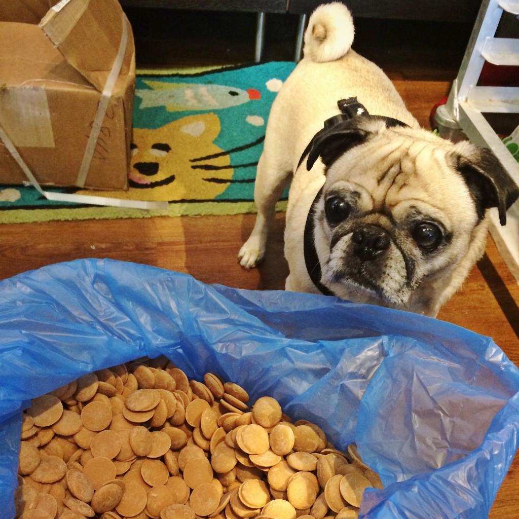 Pug Peanut Butter Heaven