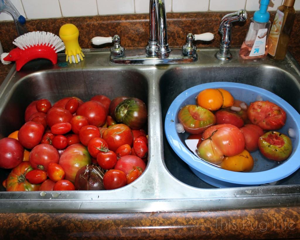 Canning Fresh Tomato Sauce