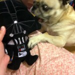 Help me Pug, You're my Only Hope