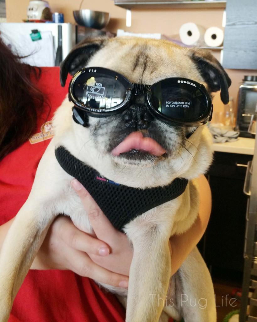 Pug Doggles