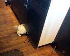 Pug's Great Treat Adventure