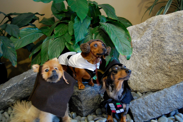 Ewok Princess Leia and Darth Vader Dog Costumes