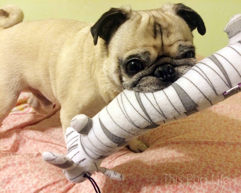 Pug's Mummy Loofah Dog