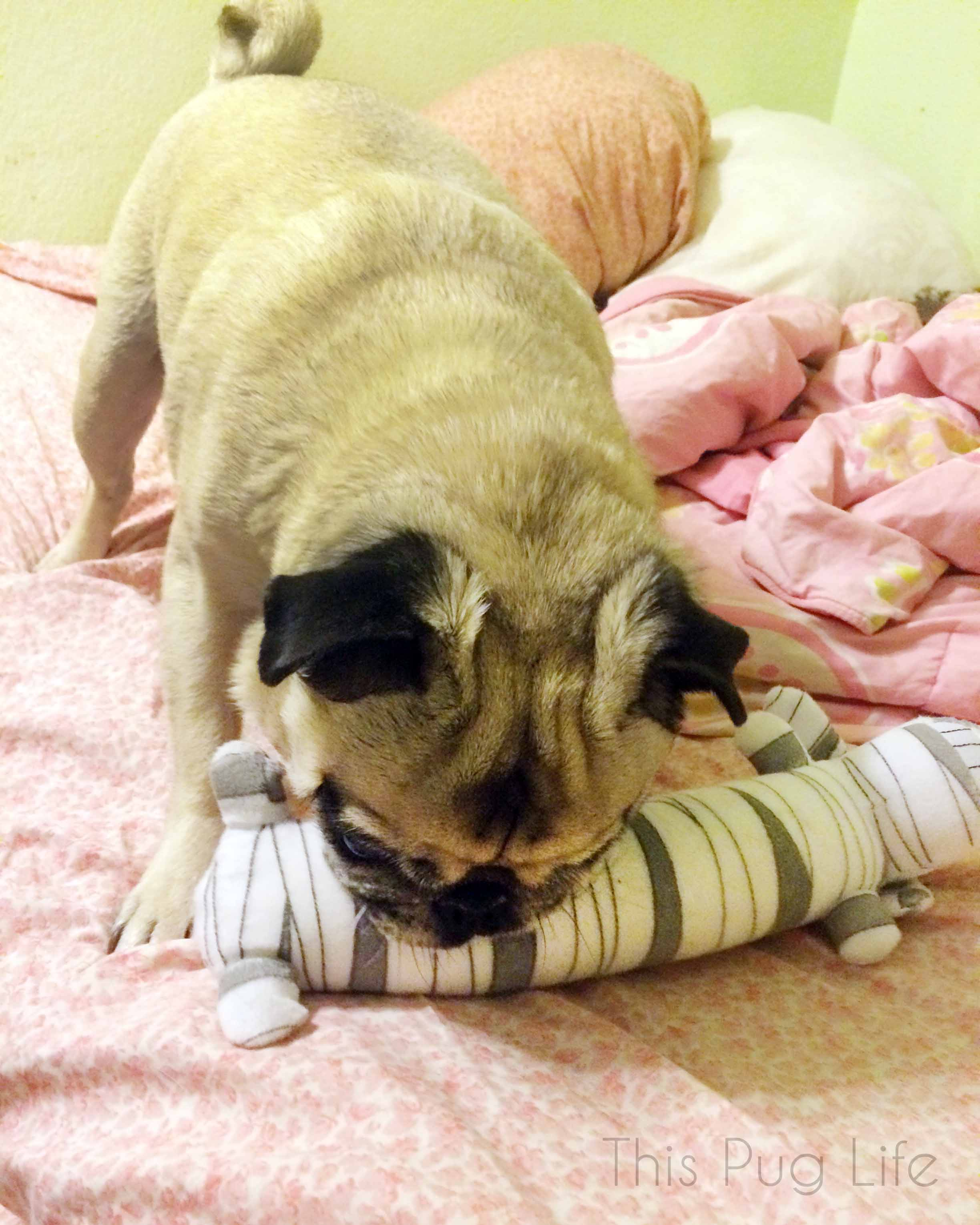 Pug's Mummy Loofah Dog