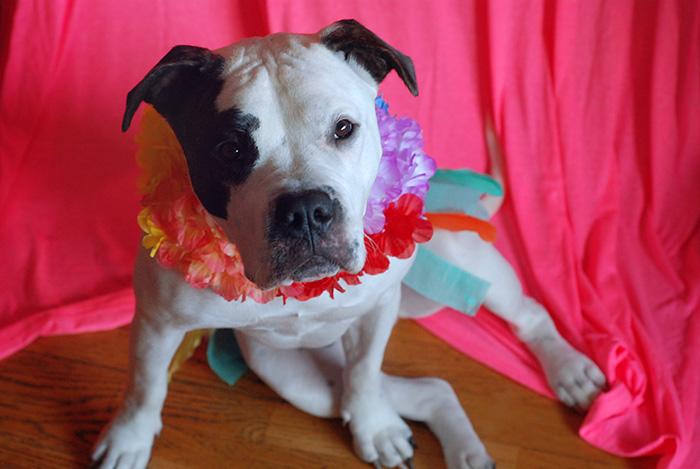 Hula Girl Dog Costume