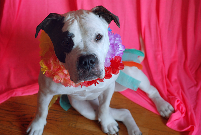 Hula Girl Dog Costume