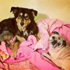 Molly and Pug Cuddles