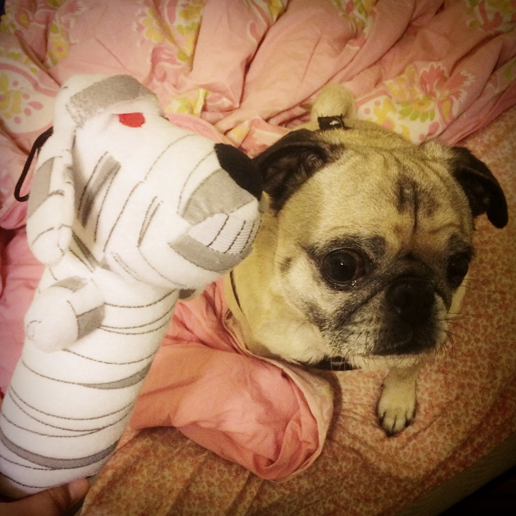 Pug Loofah Dog Mummy
