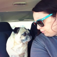 Naught Pug in Car
