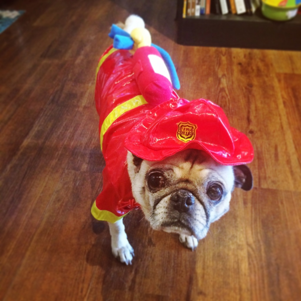 Pug Fireman Costume