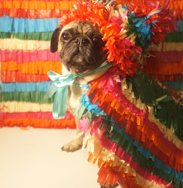 Pinata Dog Costume