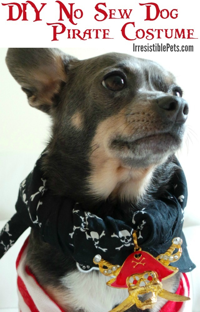 No-Sew Pirate Dog Costume