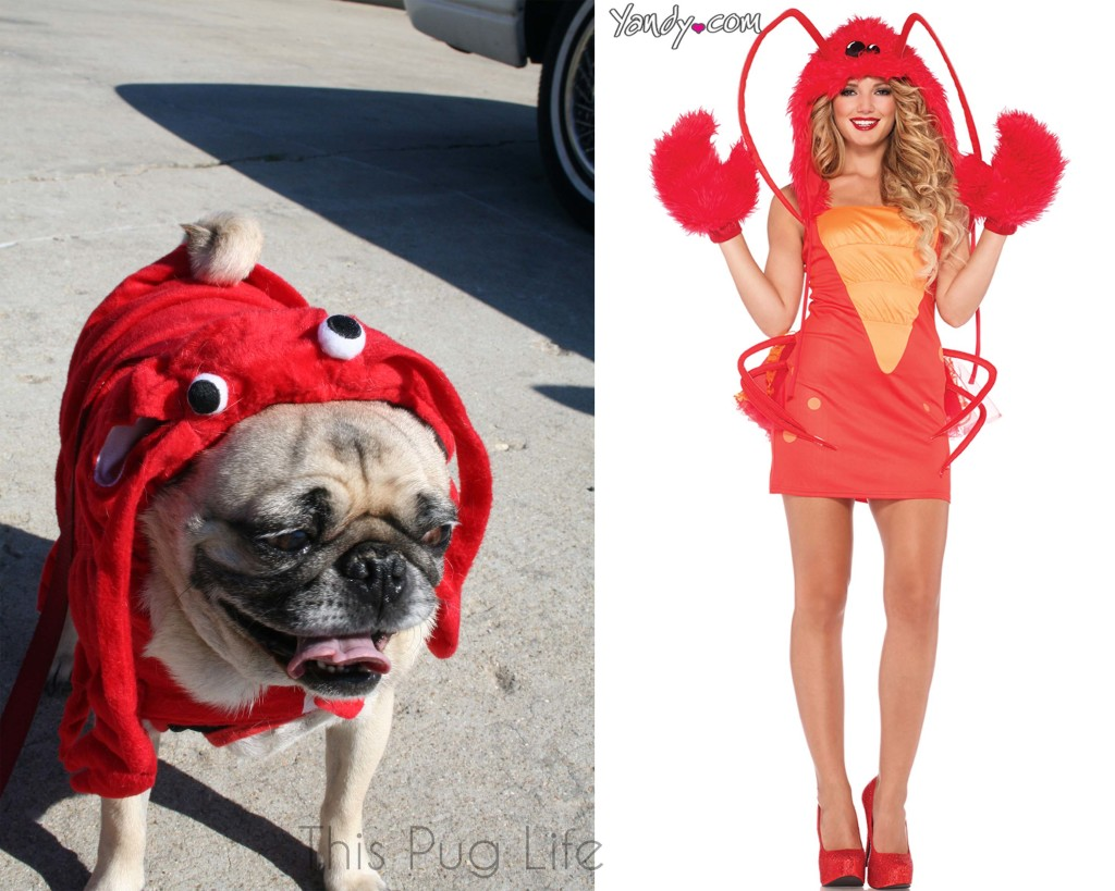 Pug Lobster vs Sexy Lobster