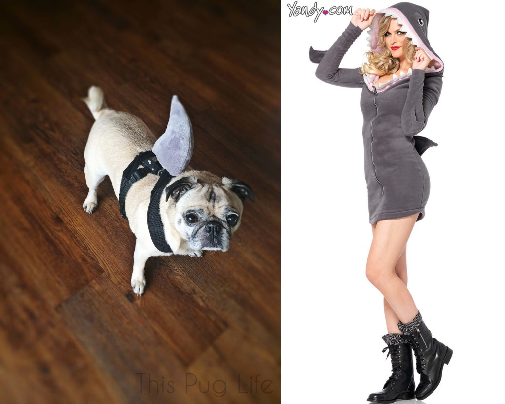Pug Shark vs Sexy Shark