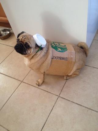 Starbucks Latte Dog Costume