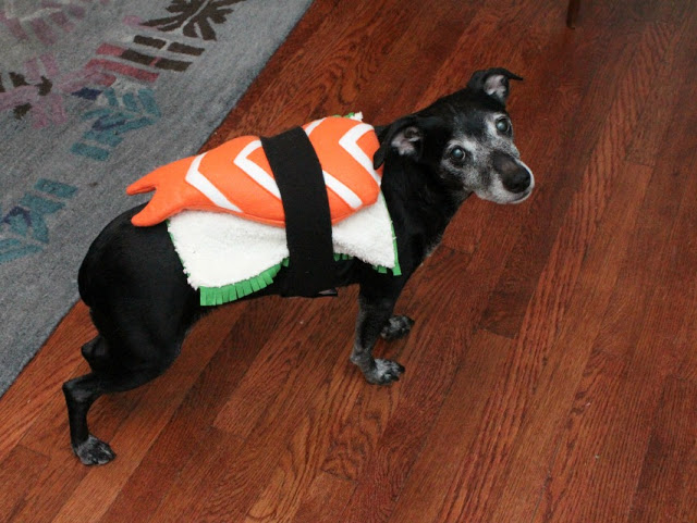 Sushi Dog Costume & 13 DIY Halloween Costumes for Dogs u2013 This Pug Life