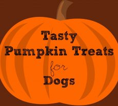 Tasty Pumpkin Treats for Dogs
