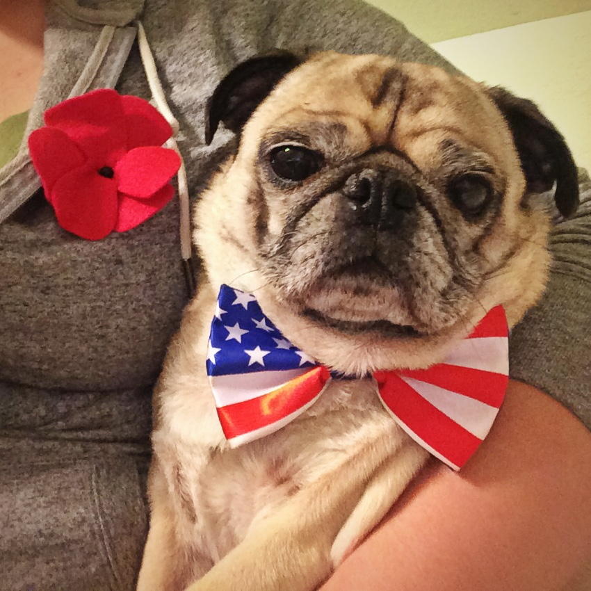 Veteran's Day Pug and Poppy