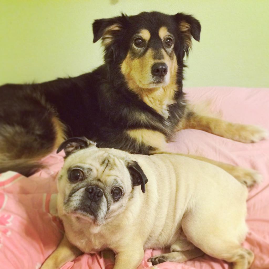 Pug and Molly