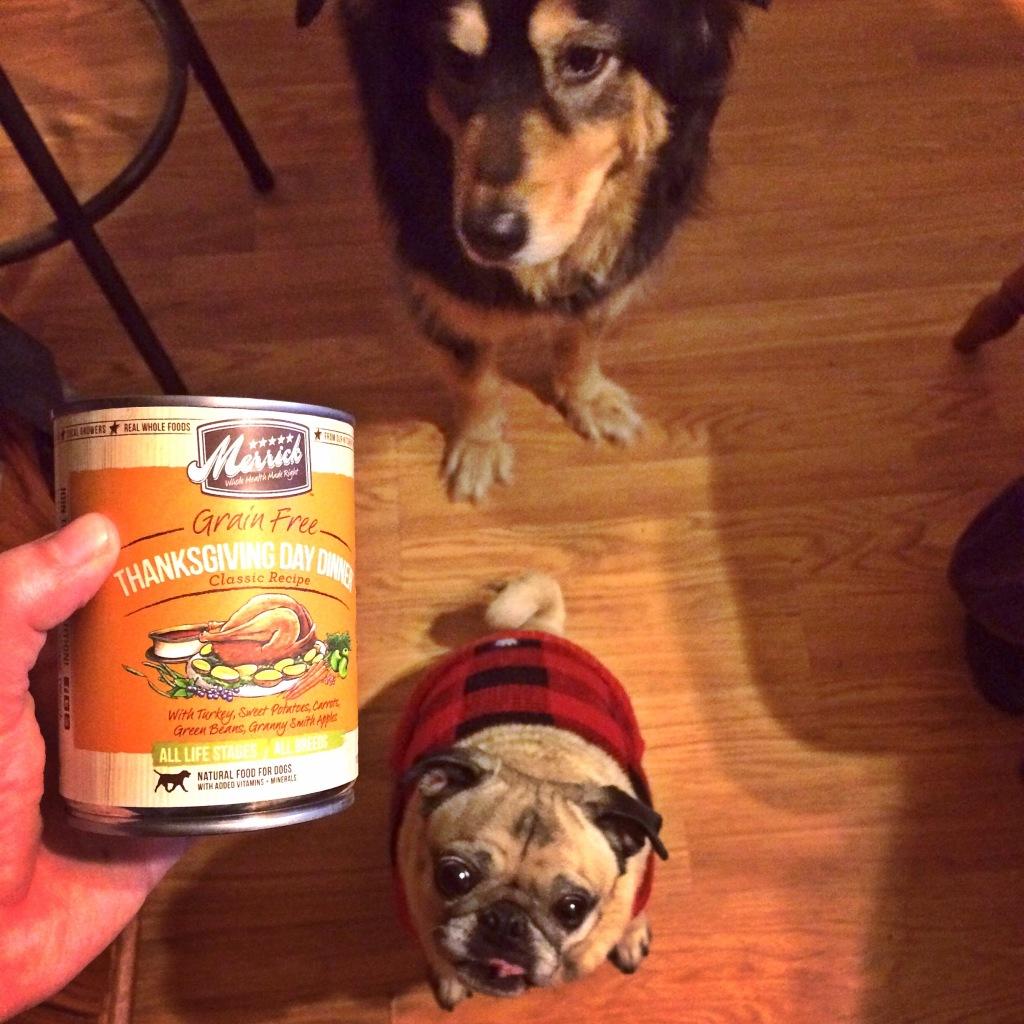 Pug Thanksgiving Day Dinner