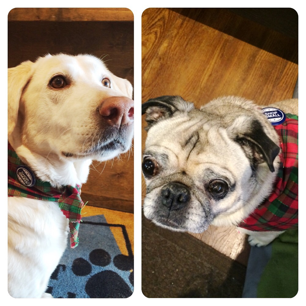 Pug Plaid Friday