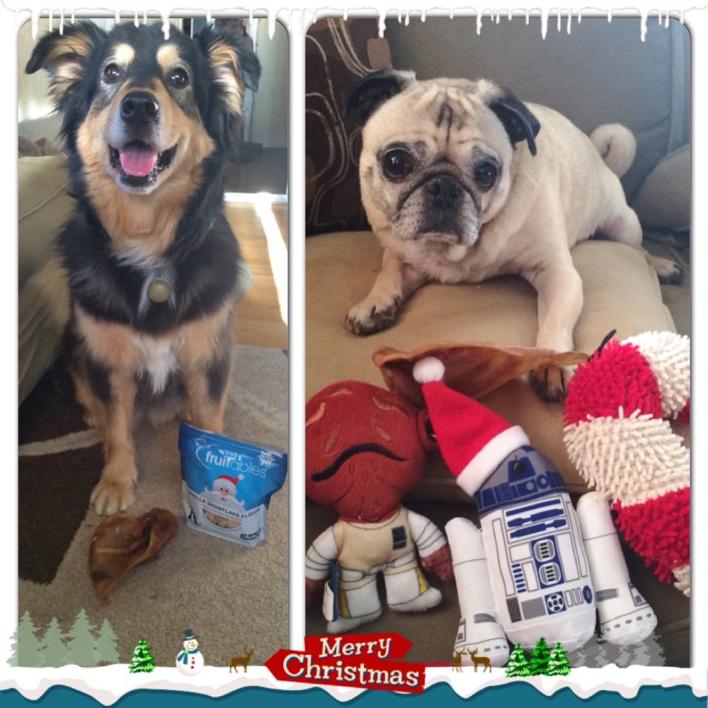 Molly and Pug Christmas Gifts