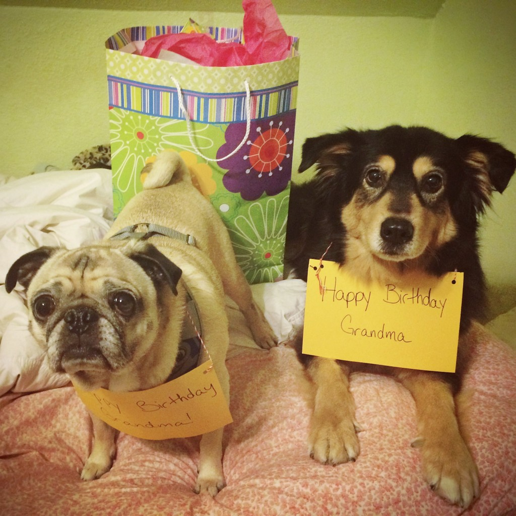 Pug Molly Happy Birthday Signs