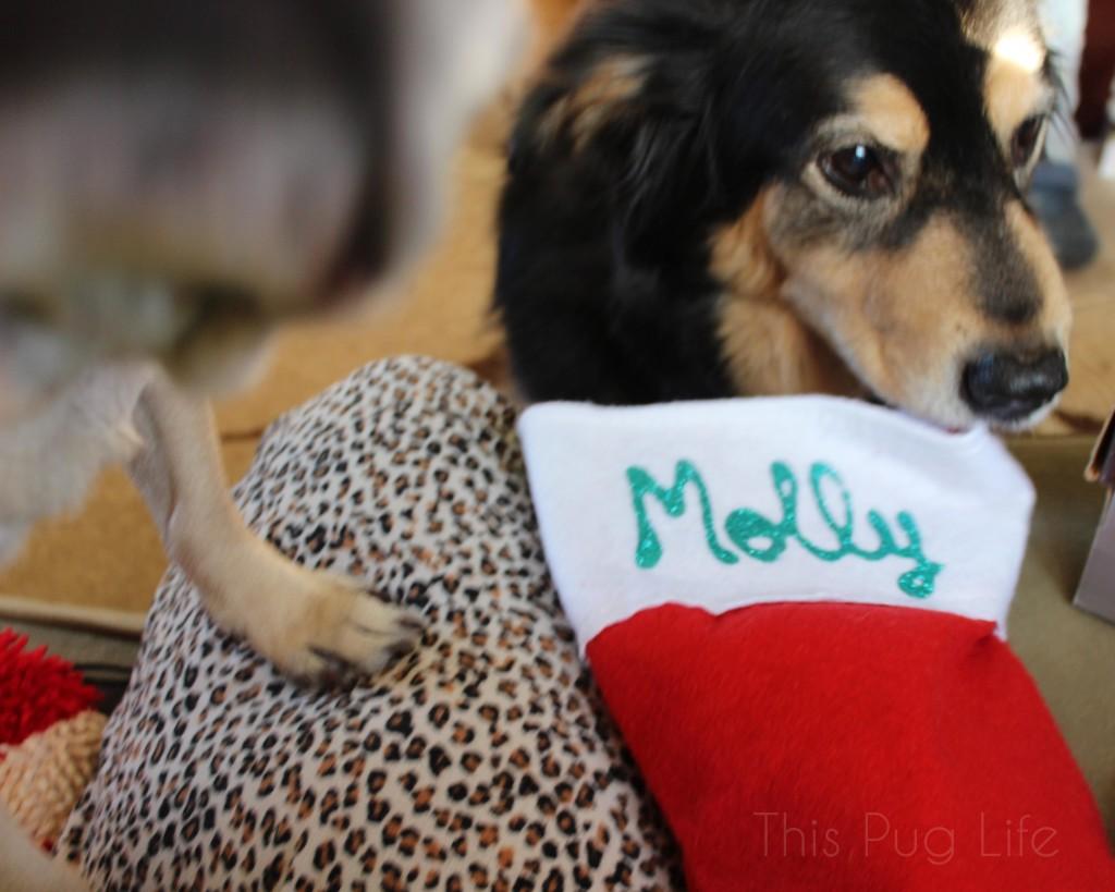 Molly Stocking