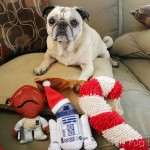 Pug and Molly Open Christmas Gifts