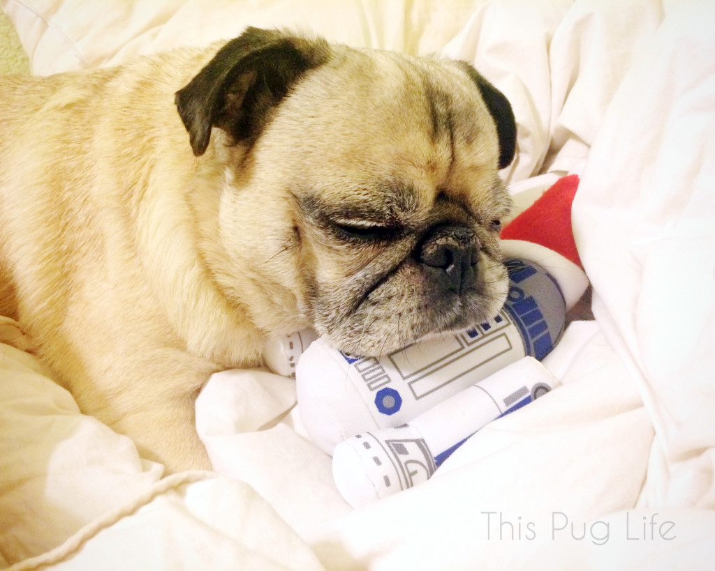Pug Christmas Gifts