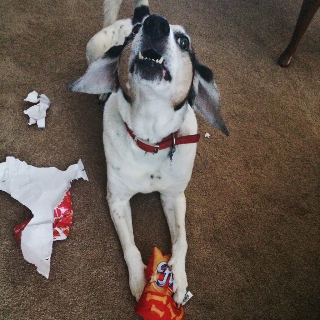 Fidos Dog Toy