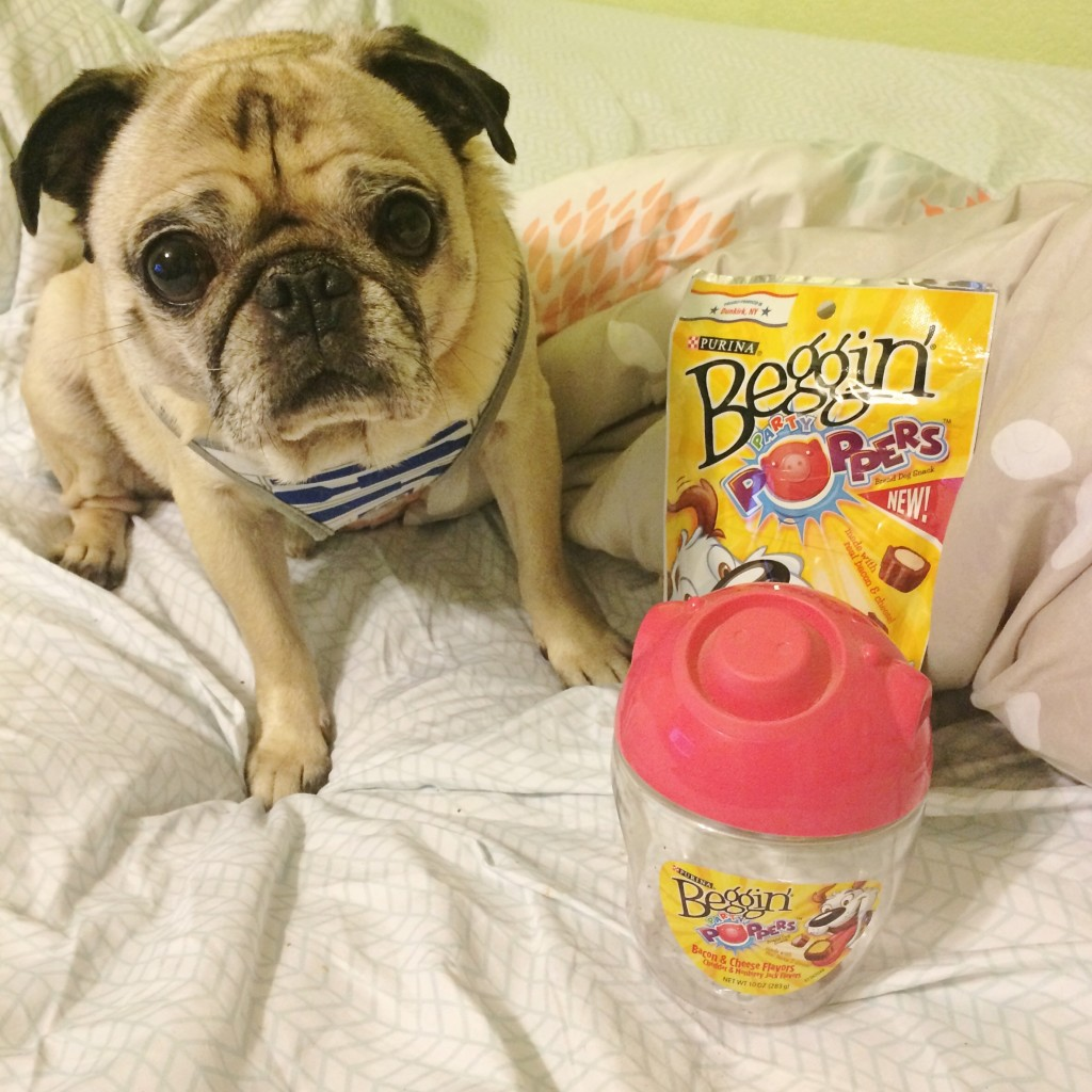 Pug Beggin' Party Poppers