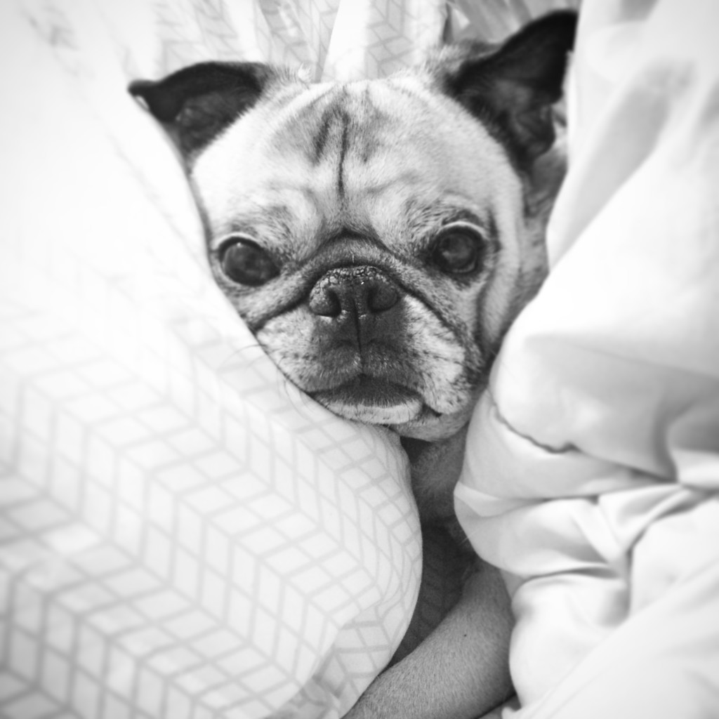 Pug Sleepy New Year's Eve
