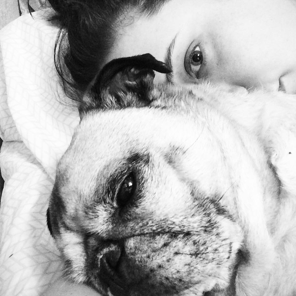 Pug Cuddles