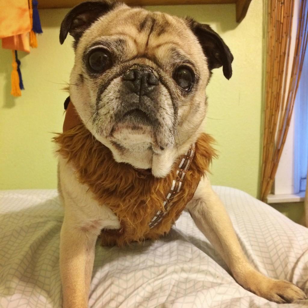 Chewbacca Pug