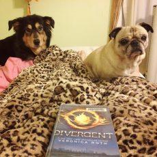 Pug Divergent
