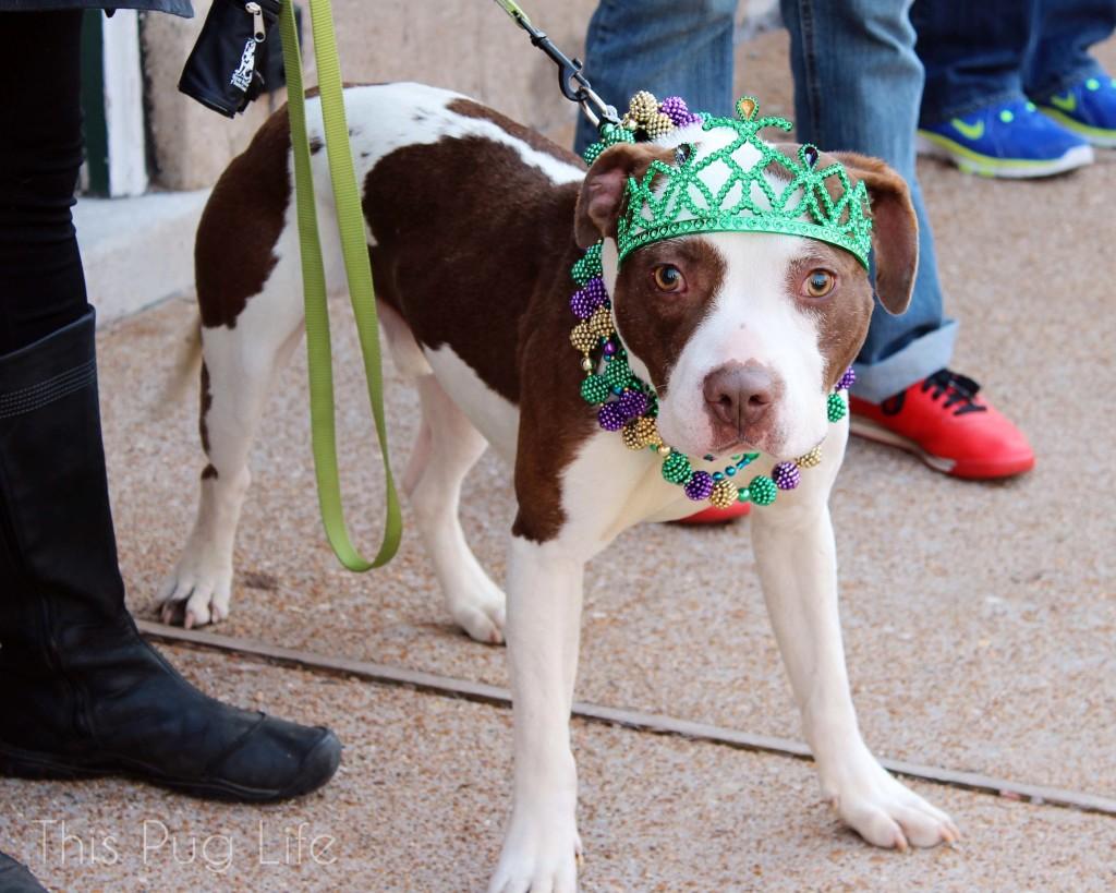Beggin' Pet Parade 2015