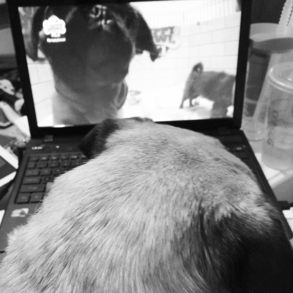 Pug Watched Puppy Bowl