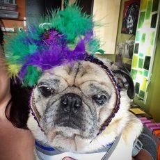 Pug Mardi Gras Headband