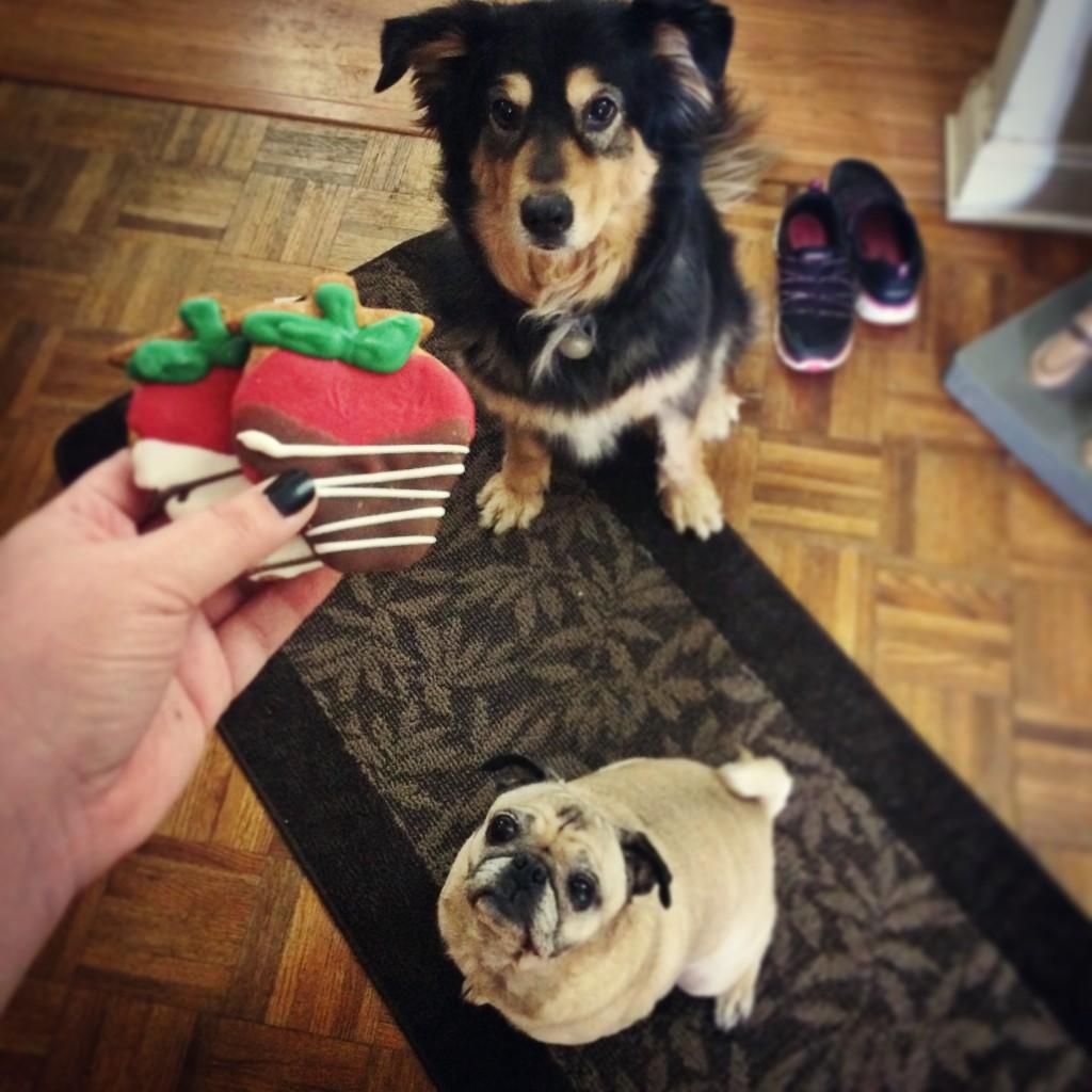 Pug Dog Valentine's